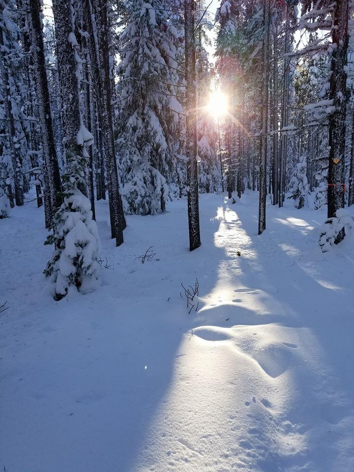 snowshoe8